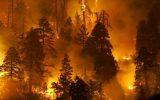 Arnavutluk Orman Yangınlarıyla Boğuştu
