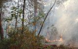 Makedonya ve Arnavutluk'ta orman yangınları